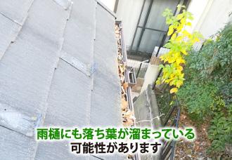 雨樋にも落ち葉が溜まっている可能性があります