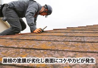 屋根の塗装にコケやカビ