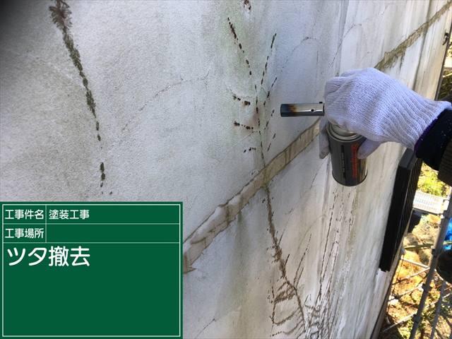 外壁ツタ撤去_0318_M00026 (2)