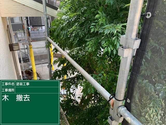 庭木撤去0826_a0001(1)004