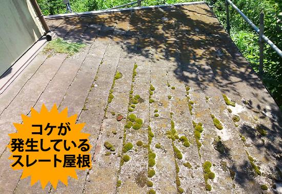 コケが発生しているスレート屋根